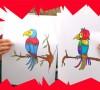 méthode pour dessiner un perroquet facilement et le colorier avec des feutres